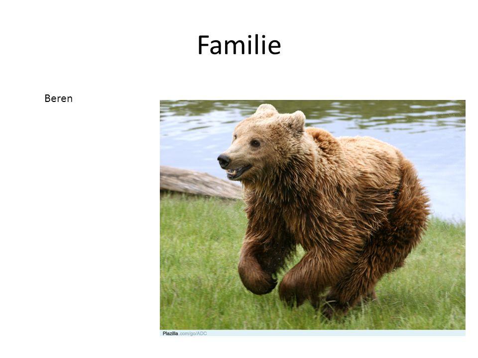 Familie Beren