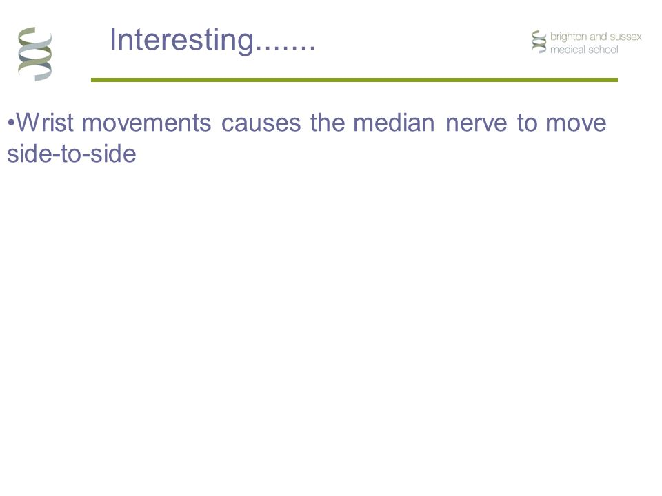Radial Ulna * * * 10mm * Wrist movements causes the median nerve to move side-to-side Interesting.......