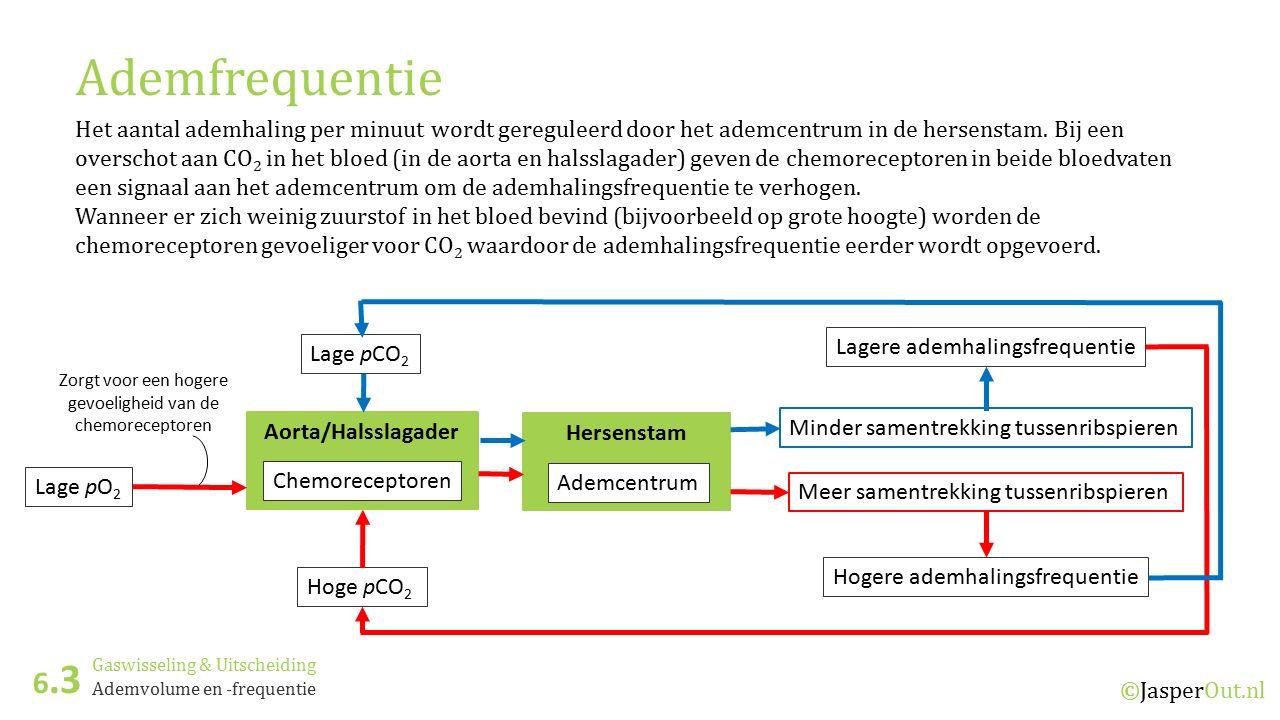 Aorta/Halsslagader Hersenstam Gaswisseling & Uitscheiding 6.3 ©JasperOut.nl Ademvolume en -frequentie Ademfrequentie Het aantal ademhaling per minuut