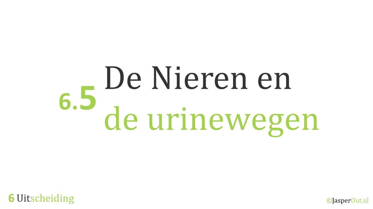 Uitscheiding 6 ©JasperOut.nl De Nieren en de urinewegen 6. 5