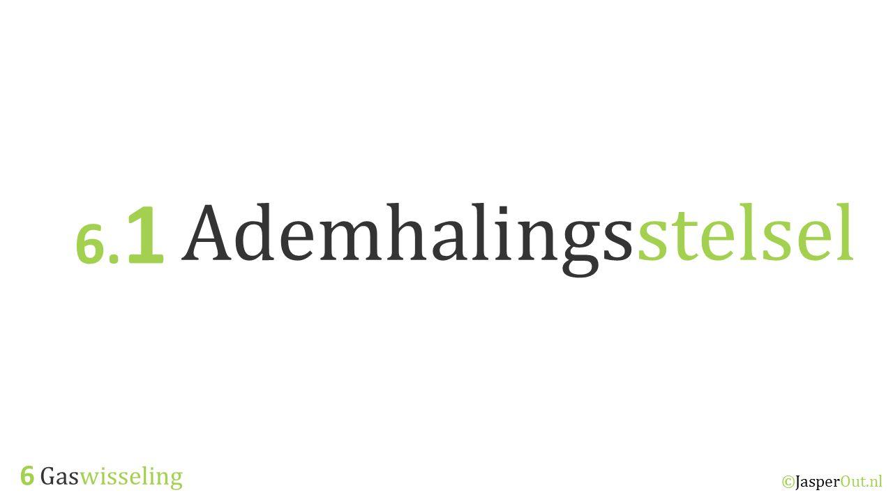 Gaswisseling & Uitscheiding 6.1 ©JasperOut.nl Het Ademhalingsstelsel Ademhalingsstelsel Je spieren