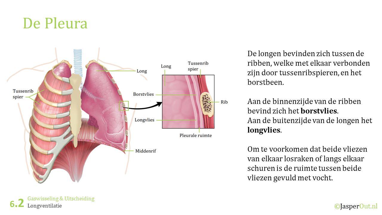 Gaswisseling & Uitscheiding 6.2 ©JasperOut.nl Longventilatie Ventilatie van de longen Inademing: Wanneer het borstbeen en de ribben omhoog bewegen door het samentrekken van de buitenste tussenribspieren en het middenrif samentrekt (en omlaag beweegt) wordt het longvolume groter en wordt lucht naar binnen gezogen.