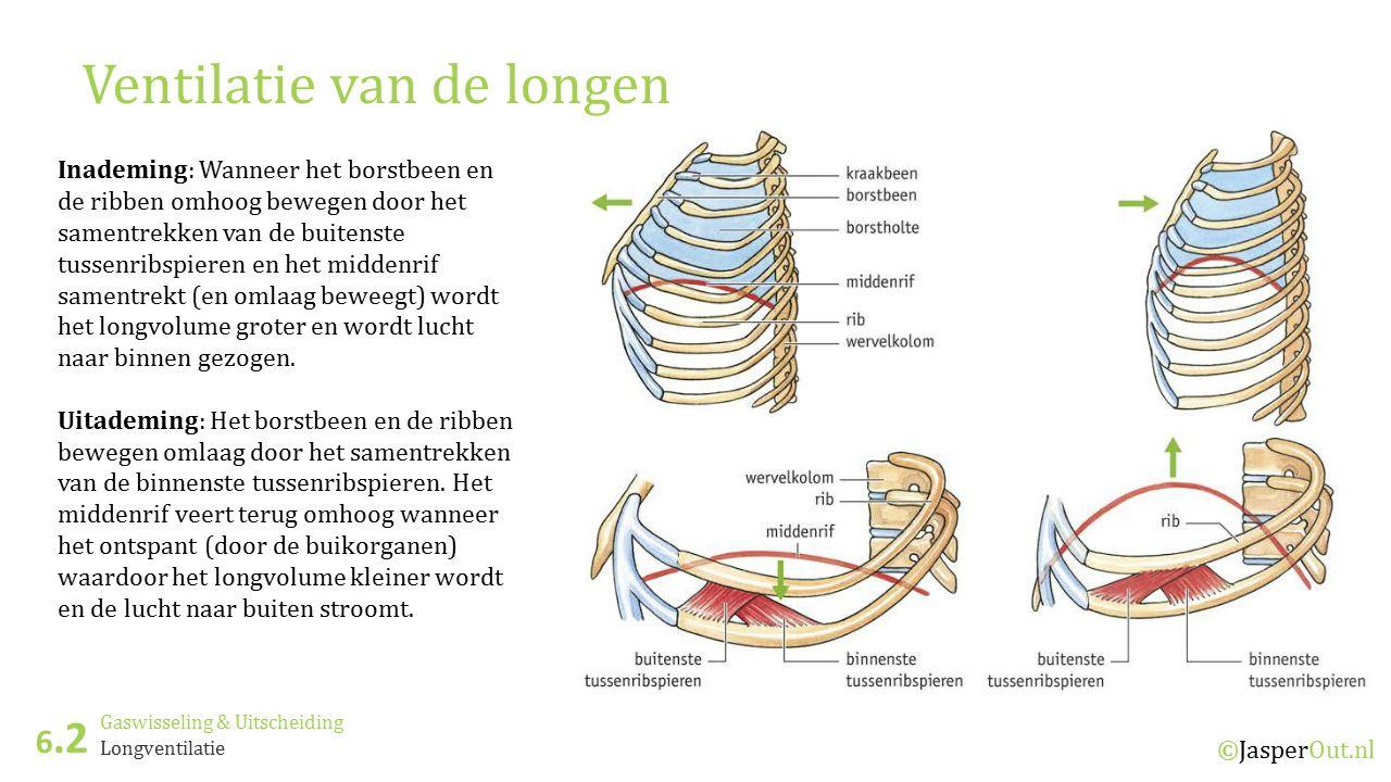 Gaswisseling & Uitscheiding 6.2 ©JasperOut.nl Longventilatie Ventilatie van de longen Inademing: Wanneer het borstbeen en de ribben omhoog bewegen doo