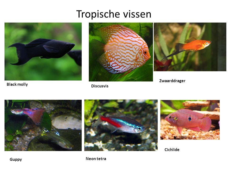 Tropische vissen Black molly Discusvis Zwaarddrager Guppy Neon tetra Cichlide