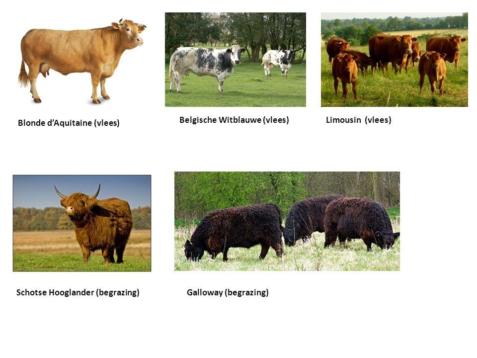 Blonde d'Aquitaine (vlees) Belgische Witblauwe (vlees) Limousin (vlees) Schotse Hooglander (begrazing)Galloway (begrazing)