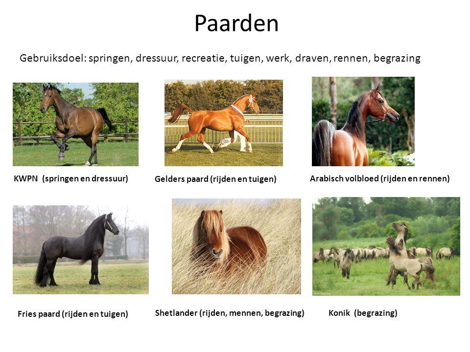 Paarden Gebruiksdoel: springen, dressuur, recreatie, tuigen, werk, draven, rennen, begrazing KWPN (springen en dressuur) Gelders paard (rijden en tuig