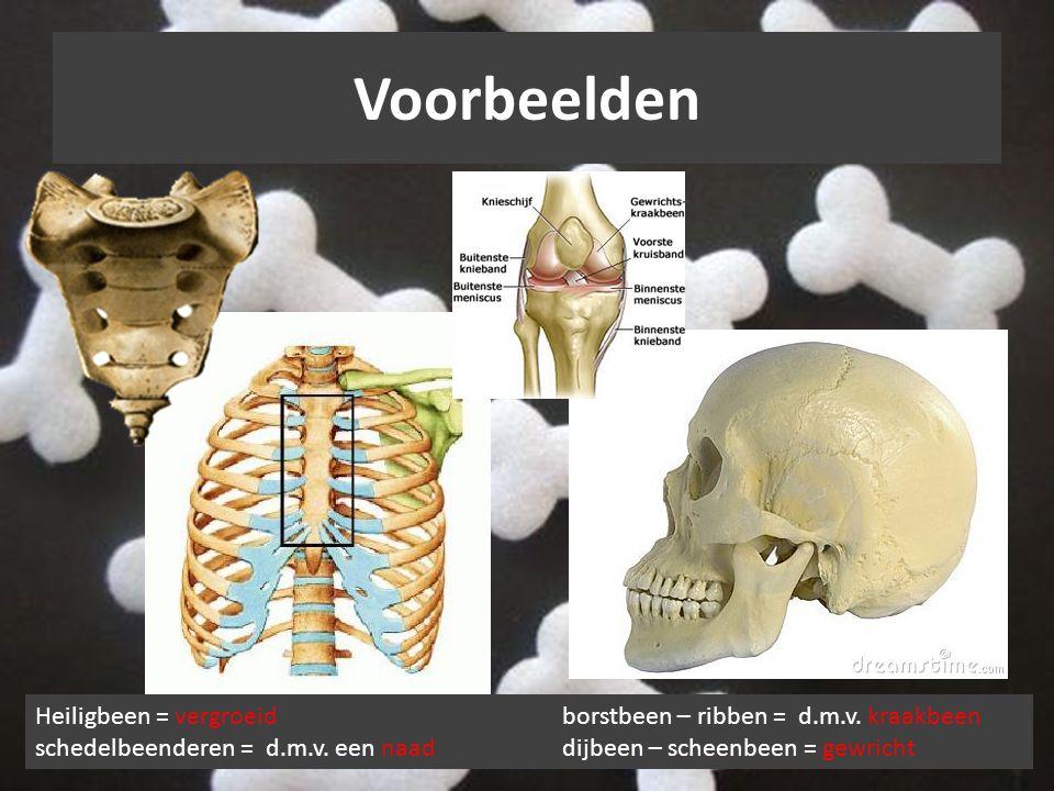 Voorbeelden Heiligbeen = vergroeidborstbeen – ribben = d.m.v. kraakbeen schedelbeenderen = d.m.v. een naaddijbeen – scheenbeen = gewricht