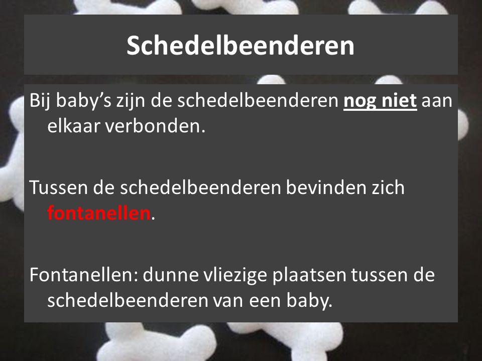 Schedelbeenderen Bij baby's zijn de schedelbeenderen nog niet aan elkaar verbonden. Tussen de schedelbeenderen bevinden zich fontanellen. Fontanellen: