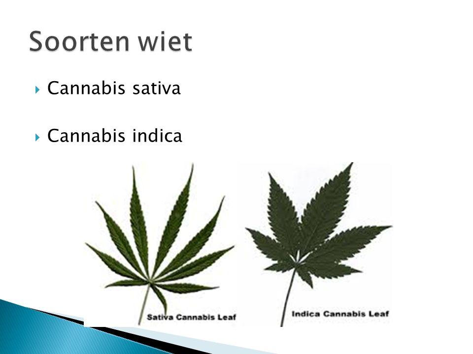  Cannabis sativa  Cannabis indica