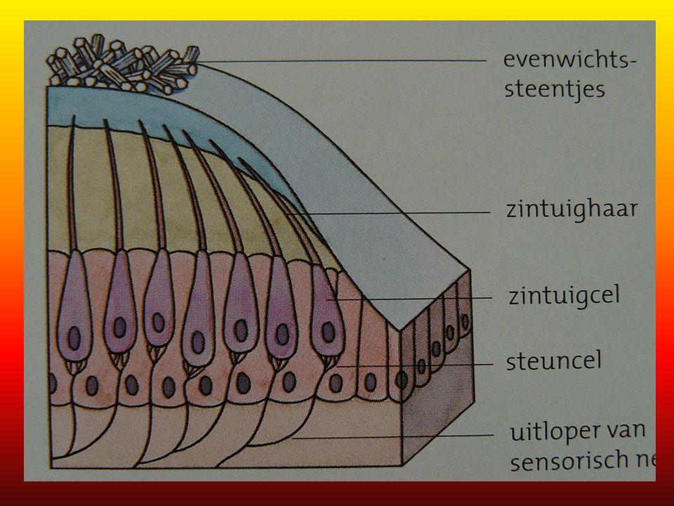 Oor en slakkenhuis etc. 1