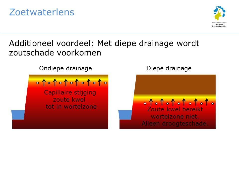 Zoetwaterlens Additioneel voordeel: Met diepe drainage wordt zoutschade voorkomen Ondiepe drainageDiepe drainage Capillaire stijging zoute kwel tot in