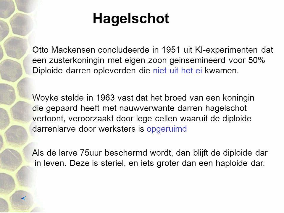 Hagelschot Woyke stelde in 1963 vast dat het broed van een koningin die gepaard heeft met nauwverwante darren hagelschot vertoont, veroorzaakt door lege cellen waaruit de diploide darrenlarve door werksters is opgeruimd Otto Mackensen concludeerde in 1951 uit KI-experimenten dat een zusterkoningin met eigen zoon geinsemineerd voor 50% Diploide darren opleverden die niet uit het ei kwamen.