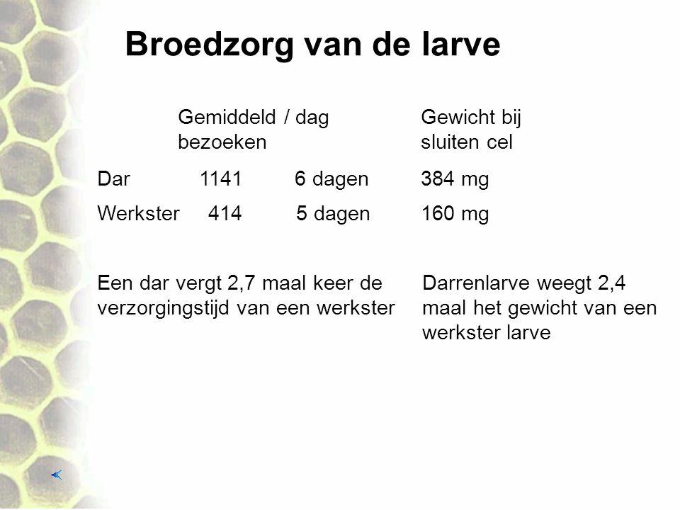 Broedzorg van de larve Een dar vergt 2,7 maal keer de verzorgingstijd van een werkster 1141 Gemiddeld / dag bezoeken Dar Werkster414 6 dagen 5 dagen G