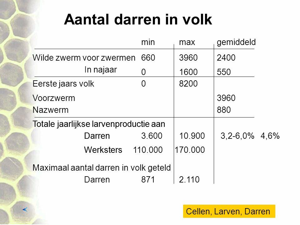Aantal darren in volk Wilde zwerm voor zwermen In najaar minmaxgemiddeld 66039602400 01600550 Eerste jaars volk Voorzwerm3960 Nazwerm880 08200 Totale jaarlijkse larvenproductie aan Darren Werksters 3.60010.900 110.000170.000 Maximaal aantal darren in volk geteld Darren8712.110 Totale jaarlijkse larvenproductie aan Darren Werksters 3,2-6,0% 4,6% Cellen, Larven, Darren
