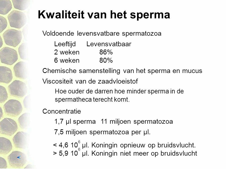 Kwaliteit van het sperma Chemische samenstelling van het sperma en mucus Voldoende levensvatbare spermatozoa Viscositeit van de zaadvloeistof Concentratie Hoe ouder de darren hoe minder sperma in de spermatheca terecht komt.