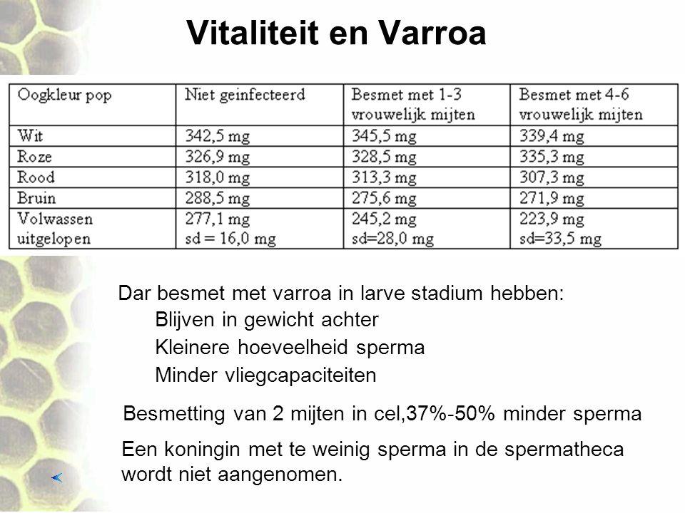 Vitaliteit en Varroa Dar besmet met varroa in larve stadium hebben: Kleinere hoeveelheid sperma Minder vliegcapaciteiten Een koningin met te weinig sp