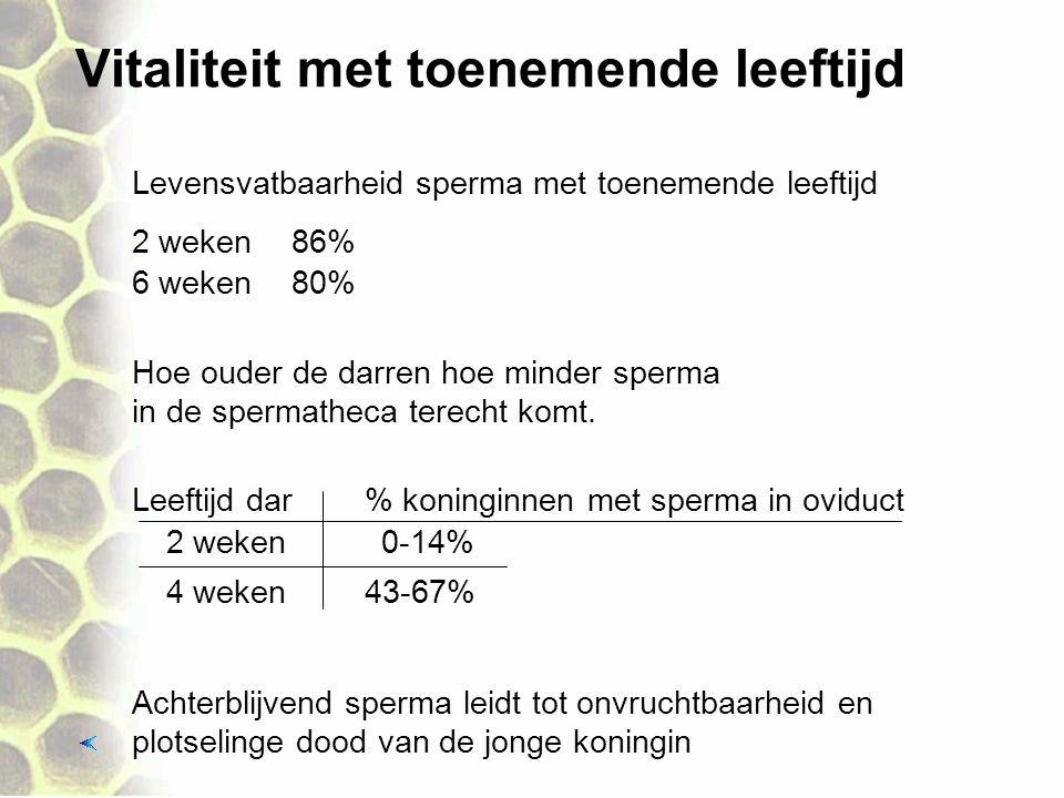 Vitaliteit met toenemende leeftijd Leeftijd dar 2 weken 4 weken % koninginnen met sperma in oviduct 0-14% 43-67% Hoe ouder de darren hoe minder sperma in de spermatheca terecht komt.
