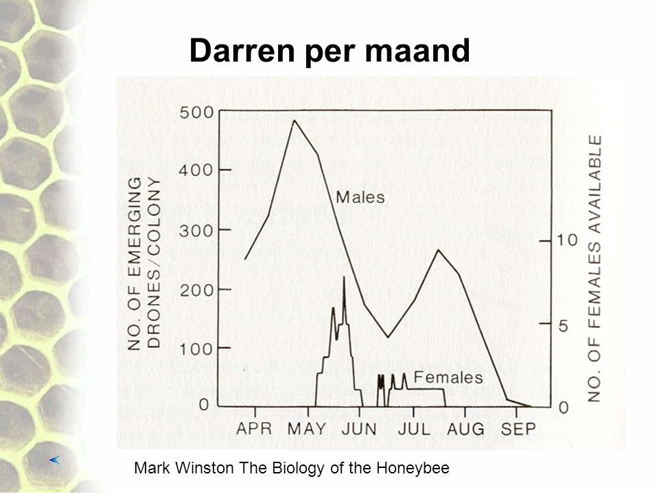 Darren per maand Mark Winston The Biology of the Honeybee