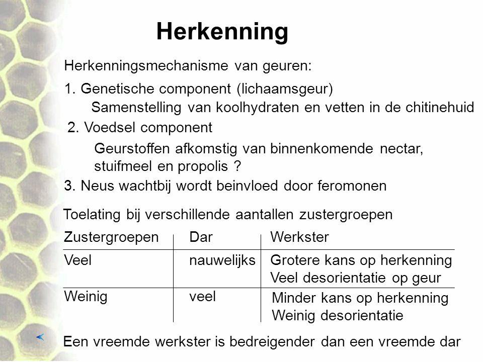 Herkenning Herkenningsmechanisme van geuren: 1. Genetische component (lichaamsgeur) Geurstoffen afkomstig van binnenkomende nectar, stuifmeel en propo