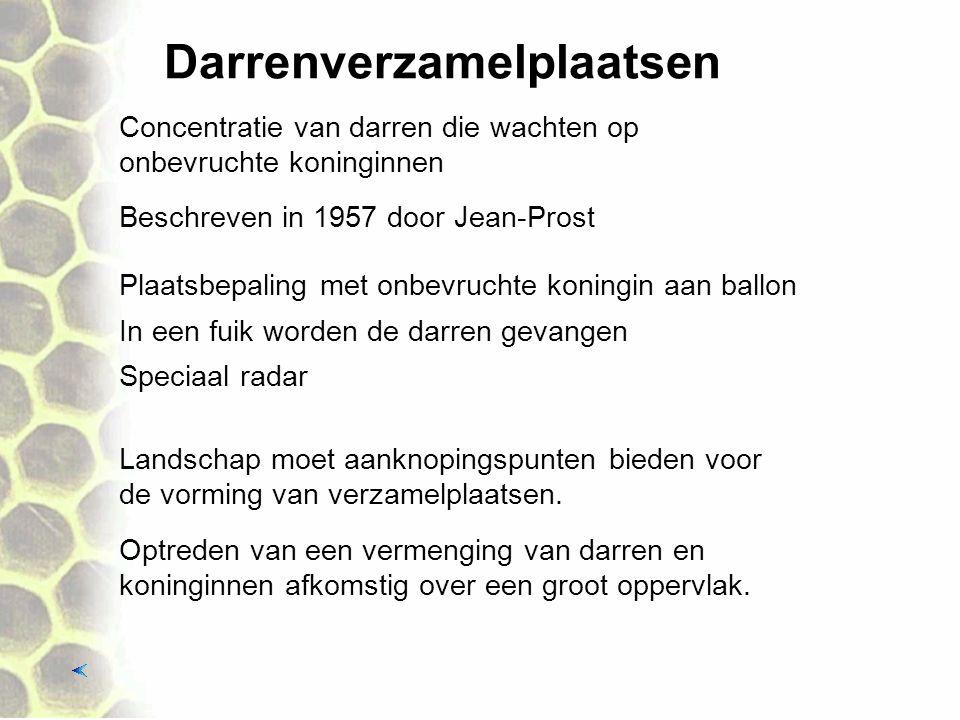 Darrenverzamelplaatsen Beschreven in 1957 door Jean-Prost Concentratie van darren die wachten op onbevruchte koninginnen Plaatsbepaling met onbevruchte koningin aan ballon In een fuik worden de darren gevangen Optreden van een vermenging van darren en koninginnen afkomstig over een groot oppervlak.