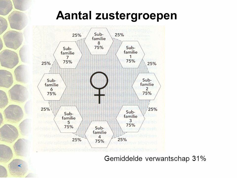 Aantal zustergroepen Gemiddelde verwantschap 31%