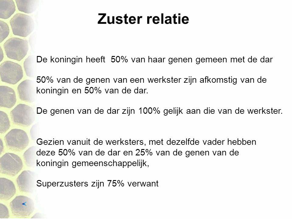 Zuster relatie De koningin heeft 50% van haar genen gemeen met de dar 50% van de genen van een werkster zijn afkomstig van de koningin en 50% van de dar.