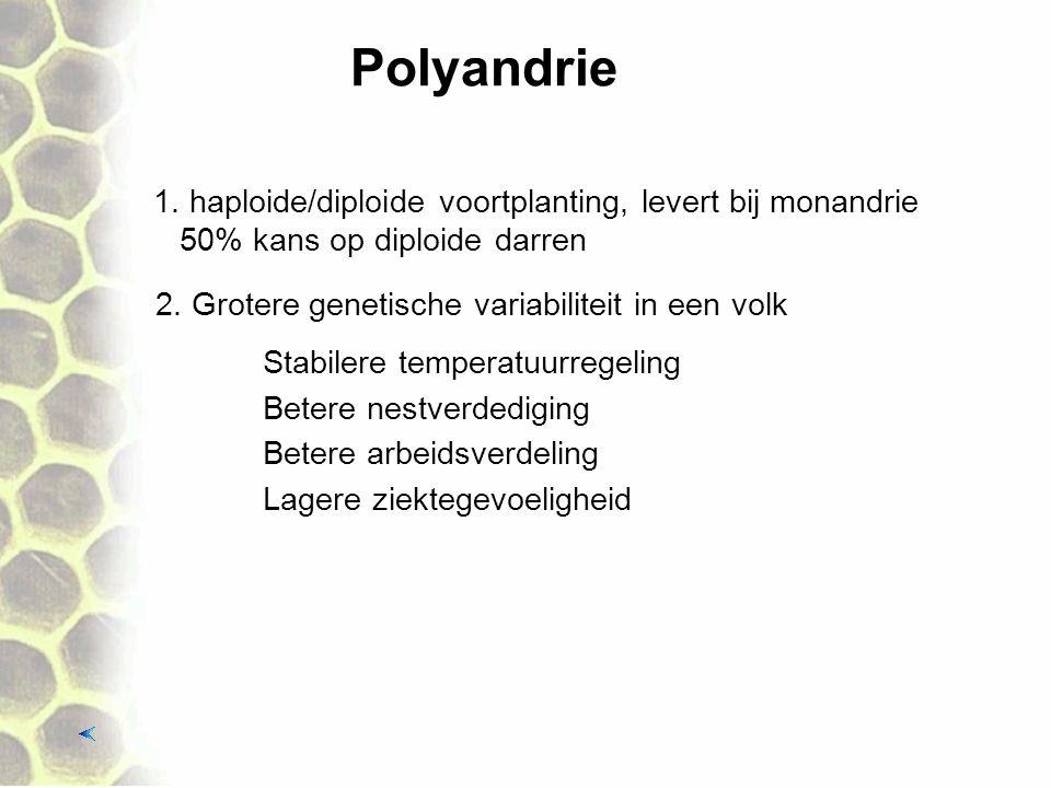 Polyandrie 2. Grotere genetische variabiliteit in een volk Stabilere temperatuurregeling 1. haploide/diploide voortplanting, levert bij monandrie 50%