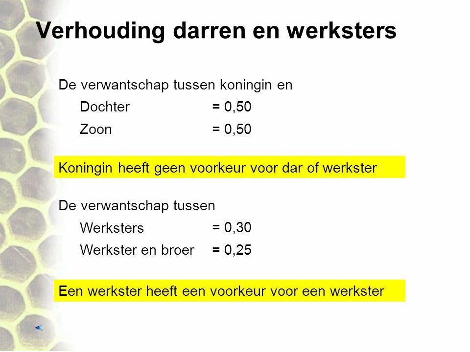 Verhouding darren en werksters Werksters Werkster en broer De verwantschap tussen = 0,30 = 0,25 Dochter Zoon De verwantschap tussen koningin en = 0,50