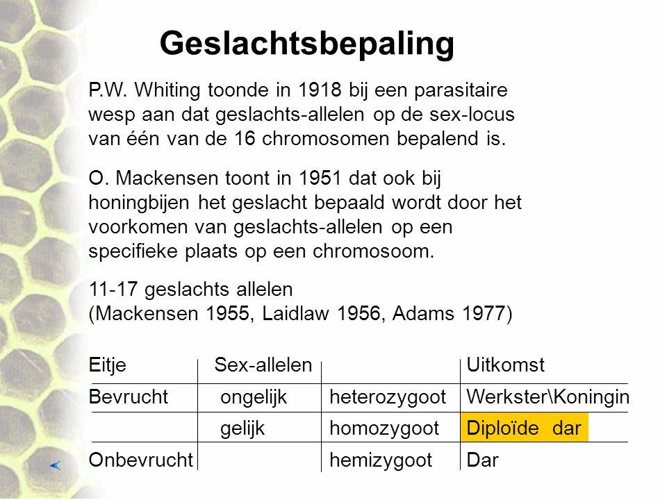 Geslachtsbepaling P.W. Whiting toonde in 1918 bij een parasitaire wesp aan dat geslachts-allelen op de sex-locus van één van de 16 chromosomen bepalen