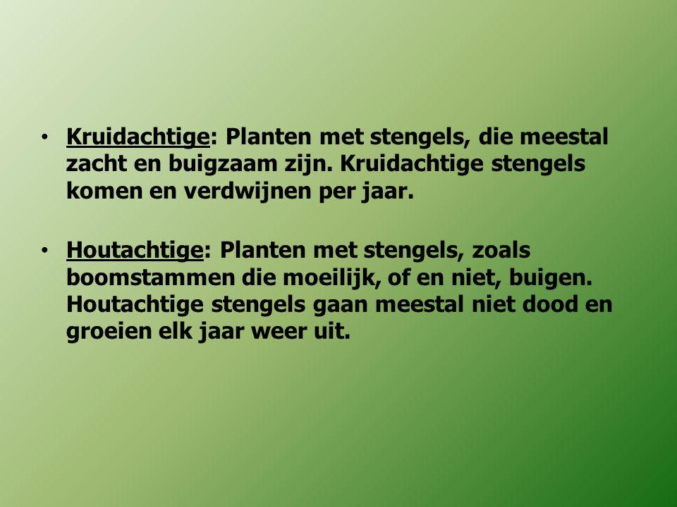 Kruidachtige: Planten met stengels, die meestal zacht en buigzaam zijn. Kruidachtige stengels komen en verdwijnen per jaar. Houtachtige: Planten met s