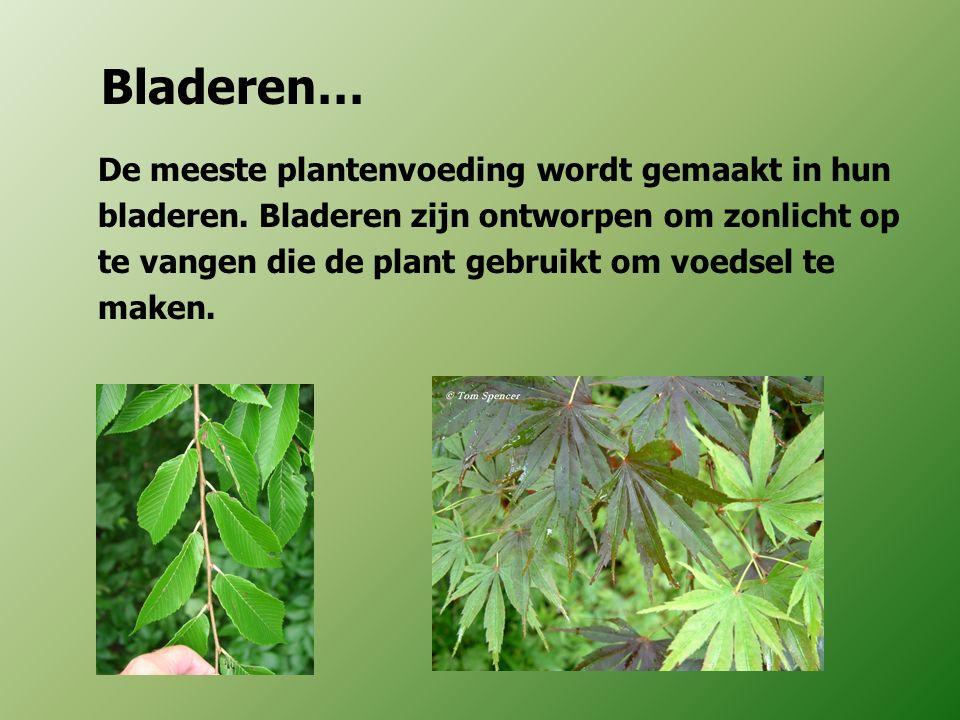 Bladeren… De meeste plantenvoeding wordt gemaakt in hun bladeren. Bladeren zijn ontworpen om zonlicht op te vangen die de plant gebruikt om voedsel te
