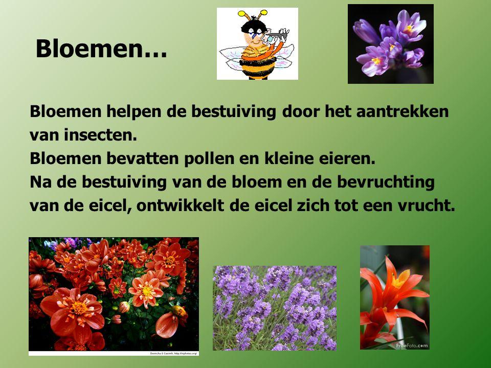 Bloemen… Bloemen helpen de bestuiving door het aantrekken van insecten. Bloemen bevatten pollen en kleine eieren. Na de bestuiving van de bloem en de