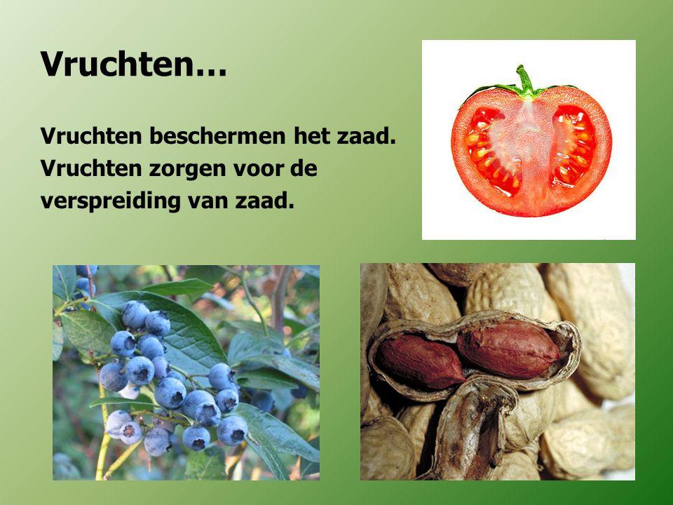 Vruchten… Vruchten beschermen het zaad. Vruchten zorgen voor de verspreiding van zaad.