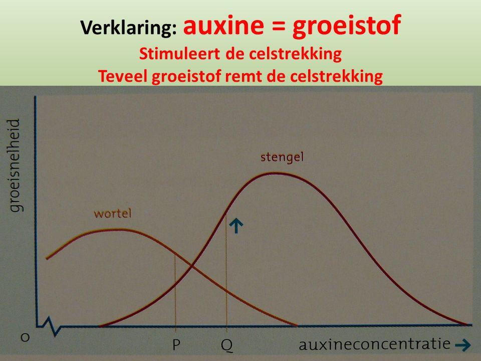 Verklaring: auxine = groeistof Stimuleert de celstrekking Teveel groeistof remt de celstrekking