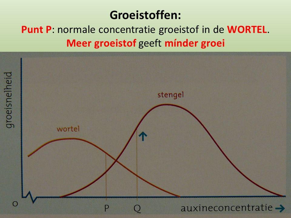 Groeistoffen: Punt P: normale concentratie groeistof in de WORTEL. Meer groeistof geeft mínder groei