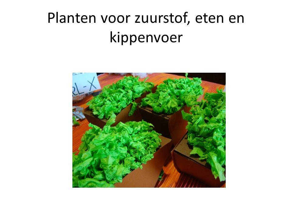 Planten voor zuurstof, eten en kippenvoer