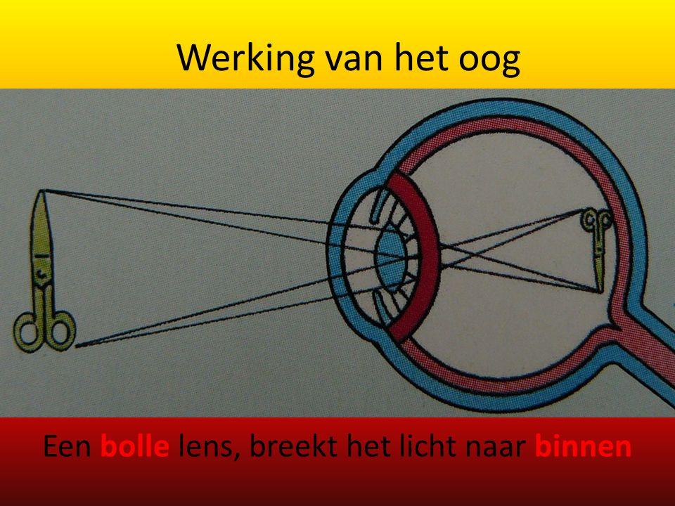 Werking van het oog Een bolle lens, breekt het licht naar binnen