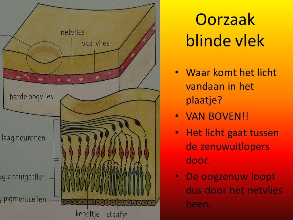Oorzaak blinde vlek Waar komt het licht vandaan in het plaatje? VAN BOVEN!! Het licht gaat tussen de zenuwuitlopers door. De oogzenuw loopt dus door h