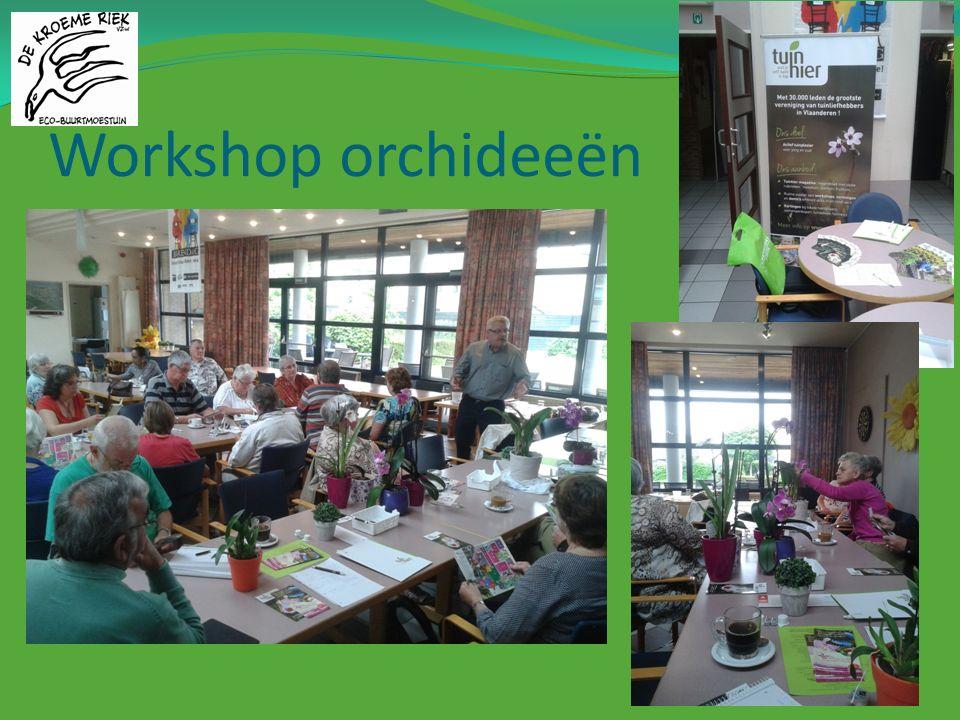 Workshop orchideeën