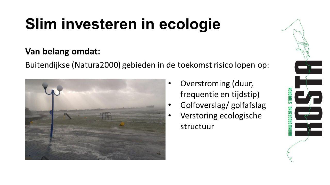 Slim investeren in ecologie Van belang omdat: Buitendijkse (Natura2000) gebieden in de toekomst risico lopen op: Overstroming (duur, frequentie en tijdstip) Golfoverslag/ golfafslag Verstoring ecologische structuur