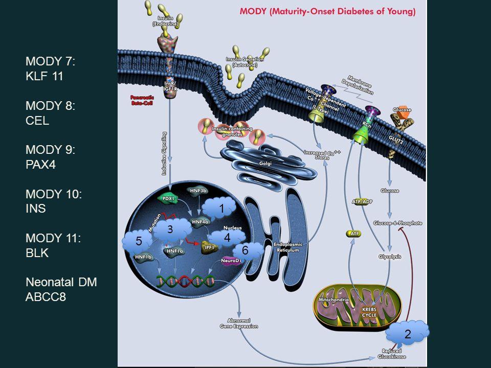 3 3 1 2 4 5 6 MODY 7: KLF 11 MODY 8: CEL MODY 9: PAX4 MODY 10: INS MODY 11: BLK Neonatal DM ABCC8