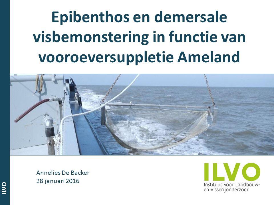 ILVO Onderzoeksgebied Vooroeversuppletie van 1,6 miljoen m³ zand tussen januari en juli 2011 Impact gebied = Ameland Impact Referentiegebied = Schiermonnikoog
