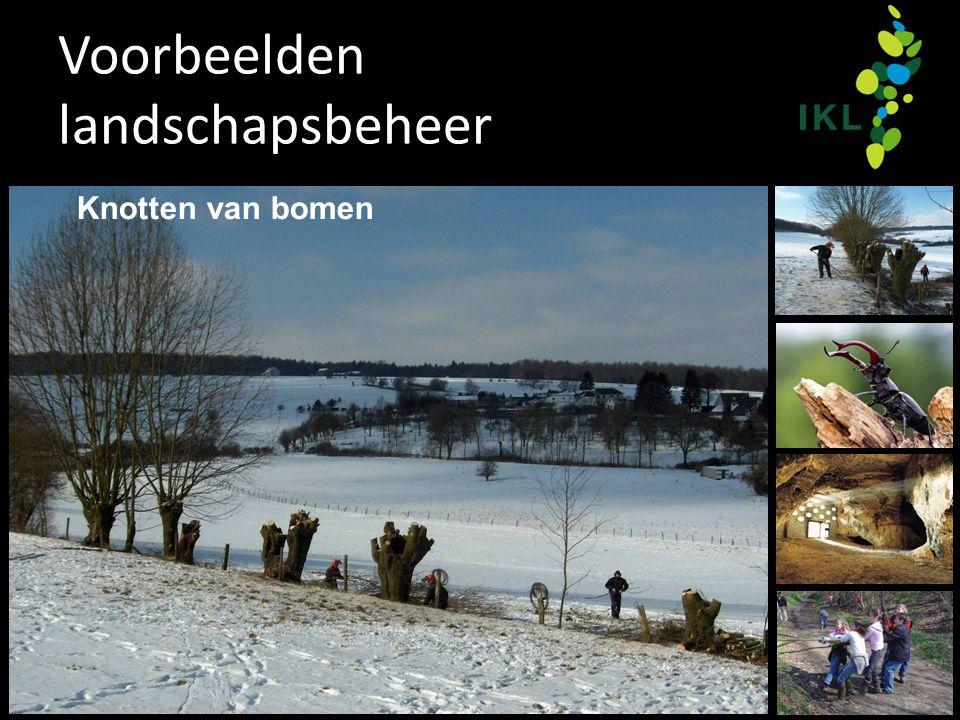 Voorbeelden landschapsbeheer Knotten van bomen