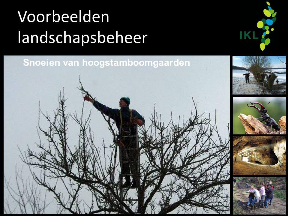 Voorbeelden landschapsbeheer Snoeien van hoogstamboomgaarden