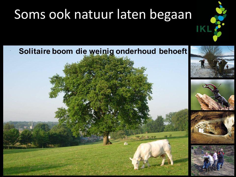 Soms ook natuur laten begaan Solitaire boom die weinig onderhoud behoeft