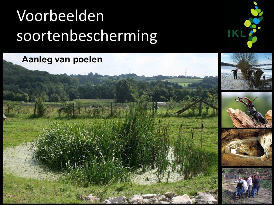 Voorbeelden soortenbescherming Aanleg van poelen