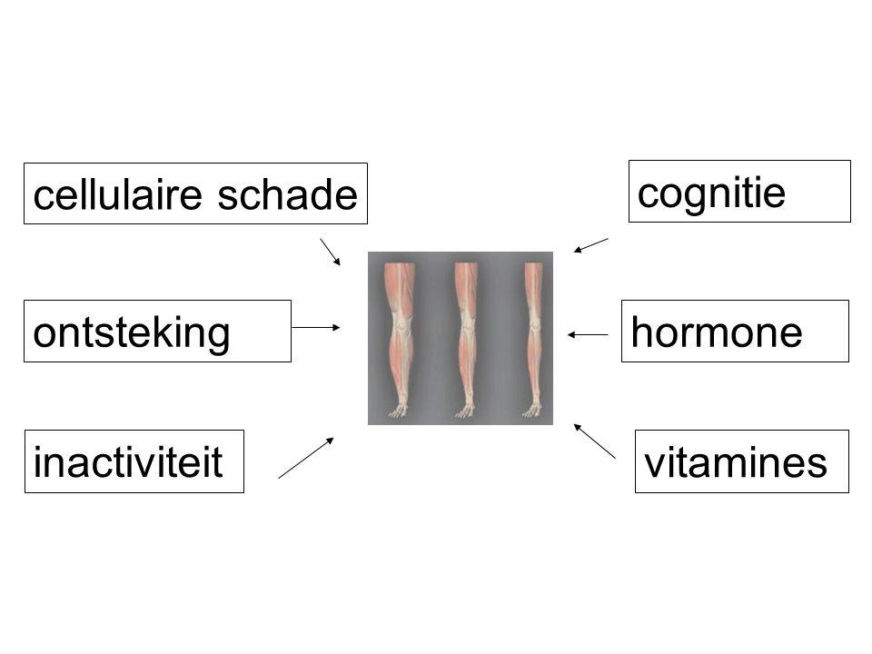 ontstekinghormone vitamines cellulaire schade cognitie inactiviteit