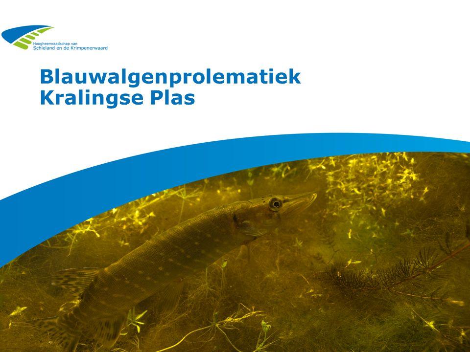 Blauwalgenprolematiek Kralingse Plas