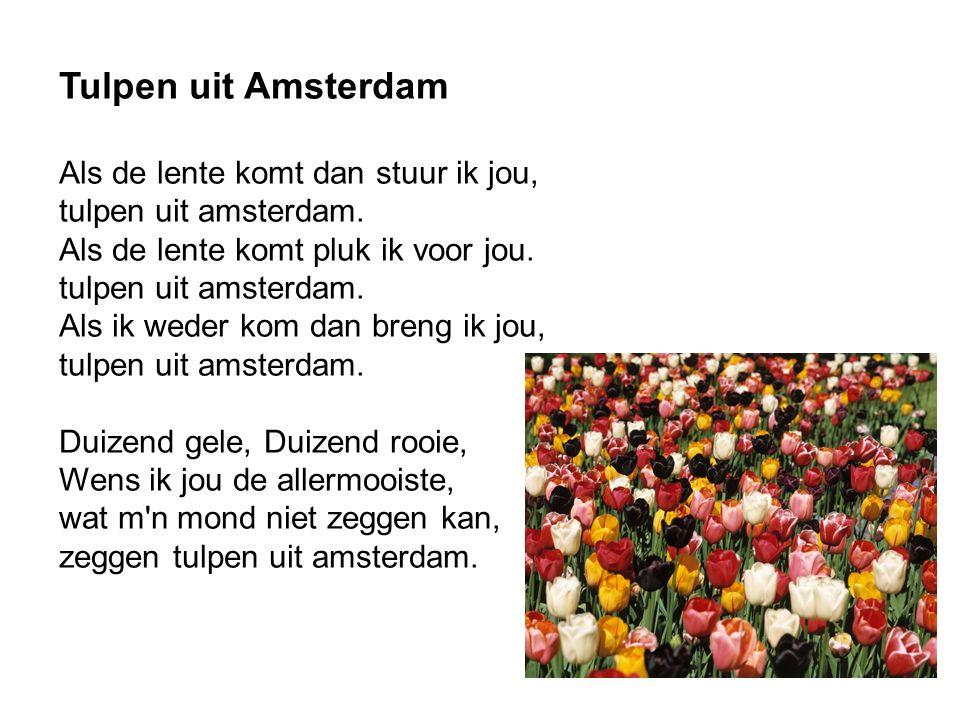 Tulpen uit Amsterdam Als de lente komt dan stuur ik jou, tulpen uit amsterdam.