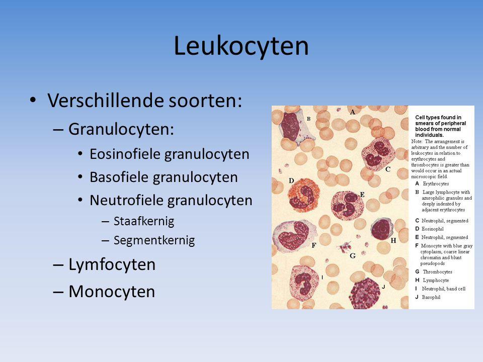 Leukocyten Verschillende soorten: – Granulocyten: Eosinofiele granulocyten Basofiele granulocyten Neutrofiele granulocyten – Staafkernig – Segmentkern